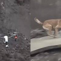 Perro y dron utilizados en operaciones de emergencia en Italia