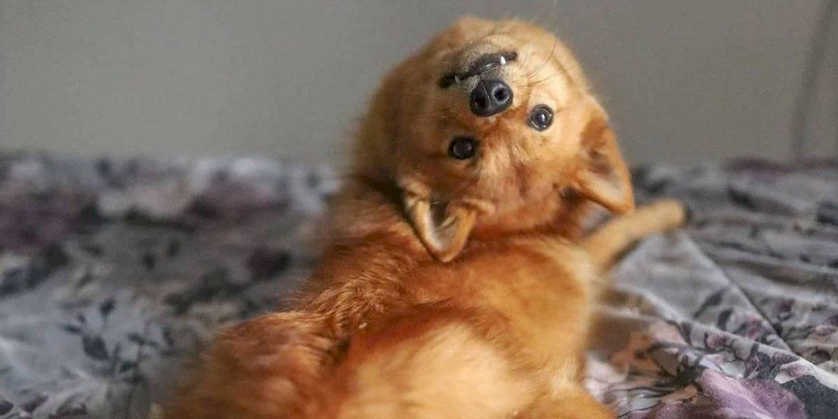 El curioso caso de una perrita que puede girar su cabeza en 180 grados
