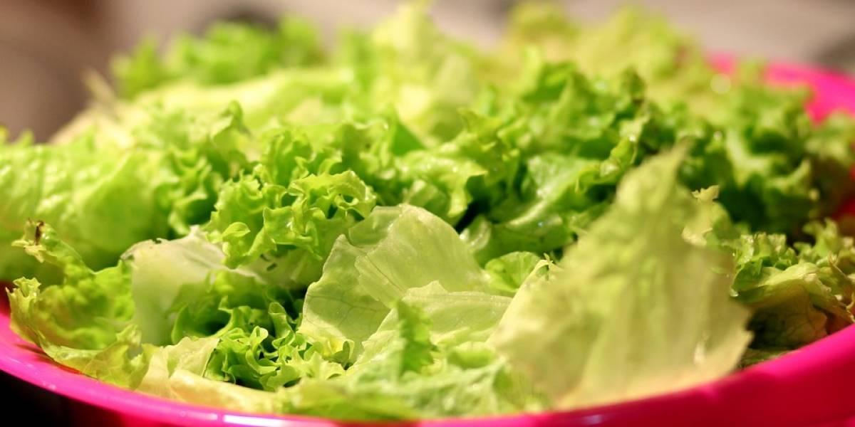 Conheça a maneira simples de como conservar a folha de alface e mantê-la crocante por até uma semana