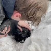 Rescatistas de Moscú reaniman a dos perros después de un incendio