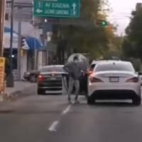 ¡Lamentable! Captan asalto a automovilista en colonia Del Valle