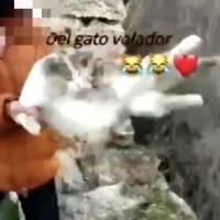 Joven española lanzó un gato por barranco y luego baila canción