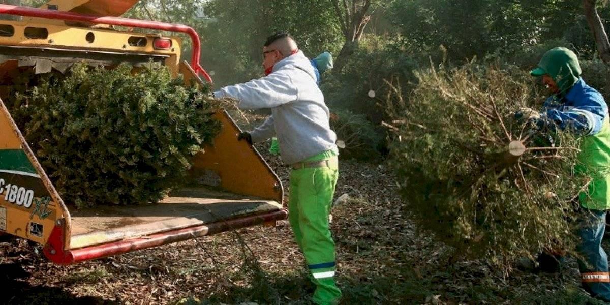 DRNA y Municipio de San Juan se unen para reciclar árboles de Navidad