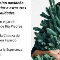 Lugares para reciclar tu árbol navideño