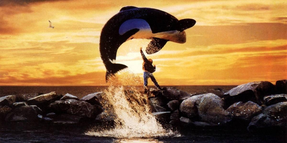 La triste historia de Keiko, la orca que qué fue estrella del cine y prisionera en la vida real