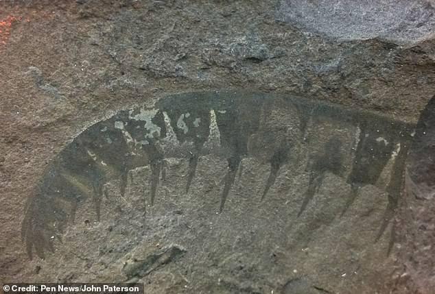 Fósiles de radiodontos.