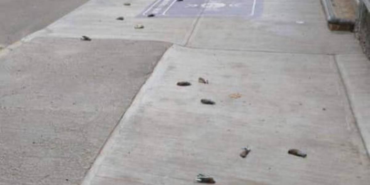 Sorprende misteriosa muerte de pájaros en Oaxaca