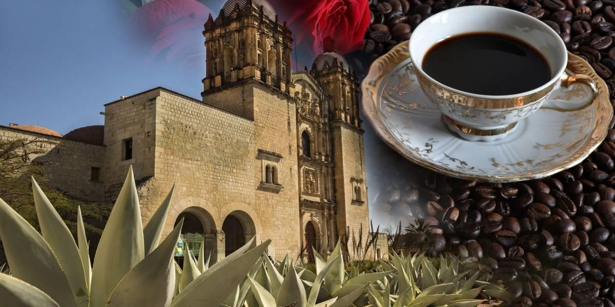 El café de Oaxaca, producido de manera sostenible, brilla dentro y fuera de México