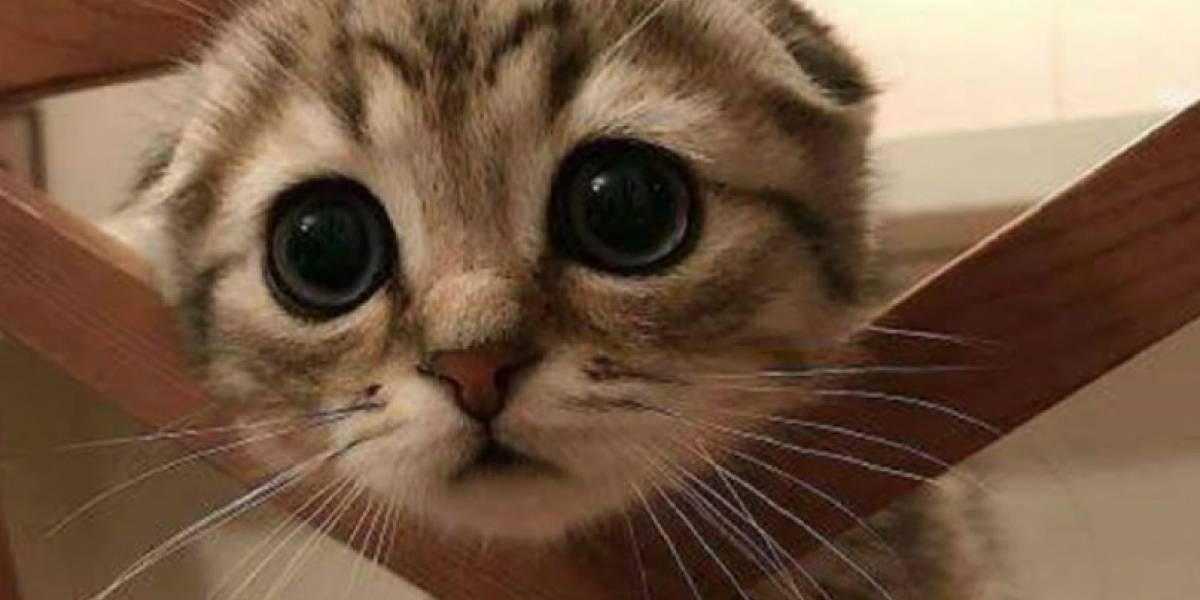 Usuarios de las redes sociales muestran los hermosos ojos de sus mascotas