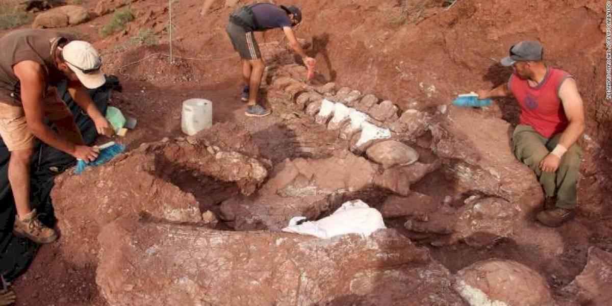 (Fotos) Encuentran fósiles del animal prehistórico más grande de la historia