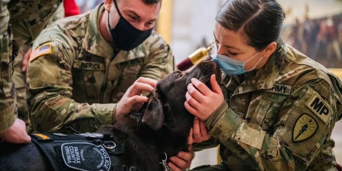 Miami Heat utilizará perros para detectar coronavirus en sus aficionados