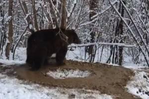 Após viver por 20 anos em cativeiro, ursa segue em 'jaula imaginária'; vídeo