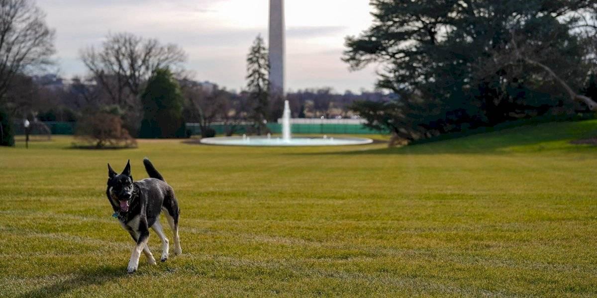 Llegan a la Casa Blanca los perros presidenciales, Champ y Major