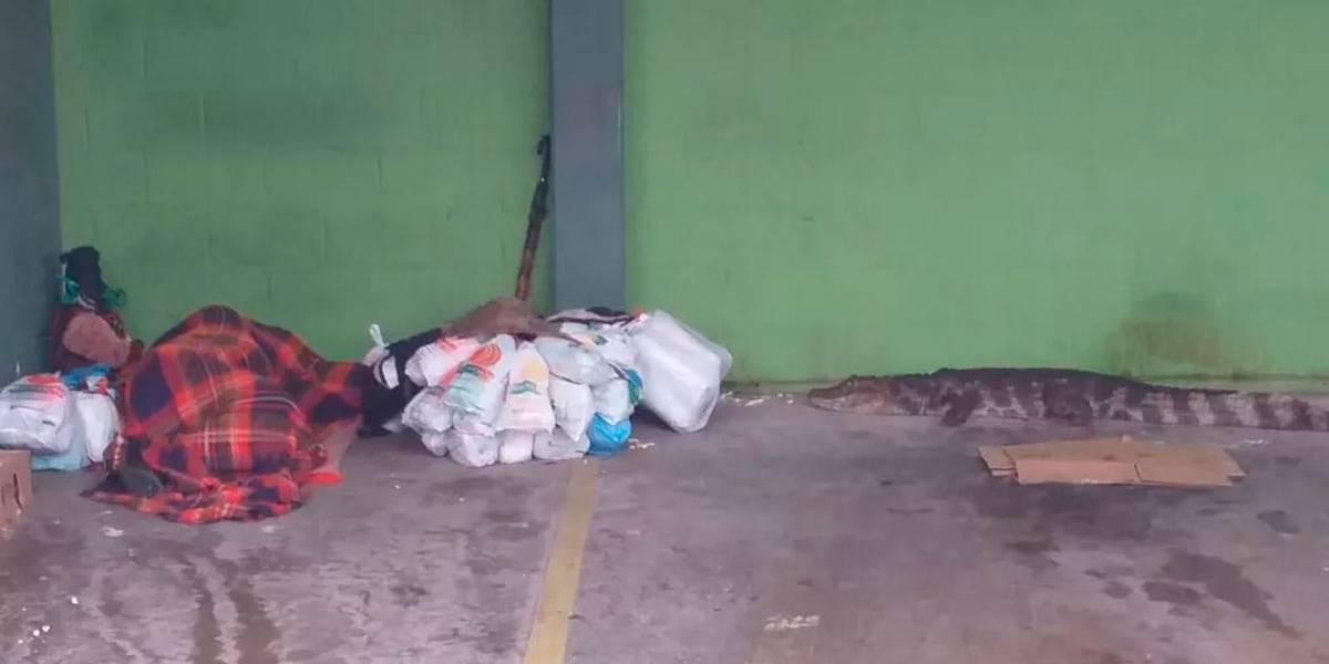 Morador de rua é surpreendido ao acordar ao lado de jacaré no litoral de SP
