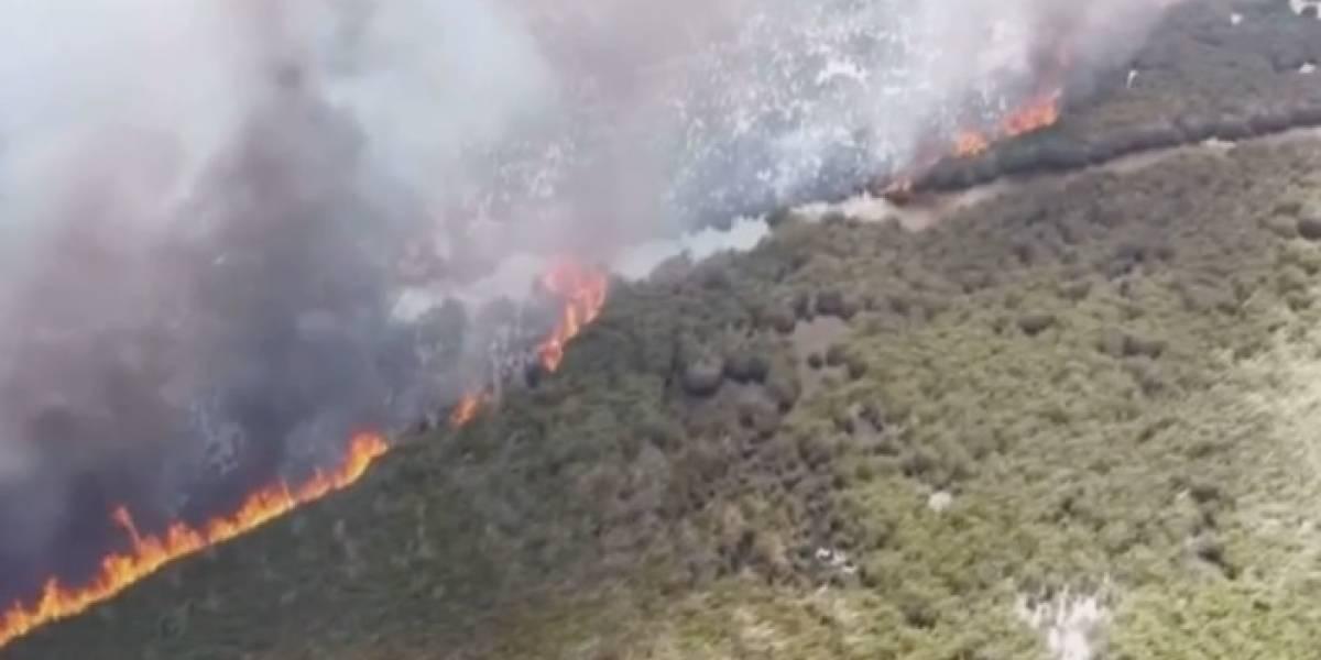 Bomberos logran controlar incendio forestal en Vega Baja