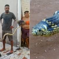 Cobra caninana é encontrada na sala de casa e moradores levam susto; espécie é uma das mais rápidas do Brasil