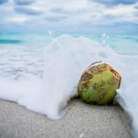 Descubra quais são os benefícios da água de coco para o seu cabelo