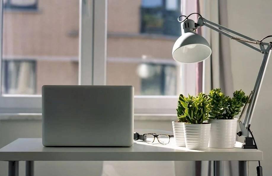 La mayoría de las plantas de interior son bastante fáciles de plantar, pues en unos casos producen cantidad de hijuelos.