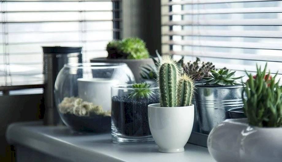 Los cactus son las plantas de interior más usadas. Es una planta muy versátil y se adapta muy bien en todos los espacios de la casa.