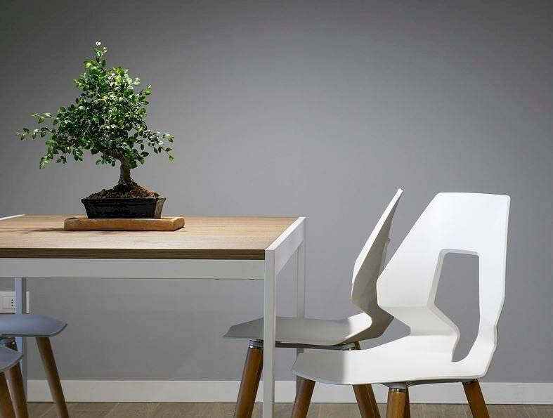 Las plantas de interior requieren de una poda regular para que se mantengan sanas y saludables.