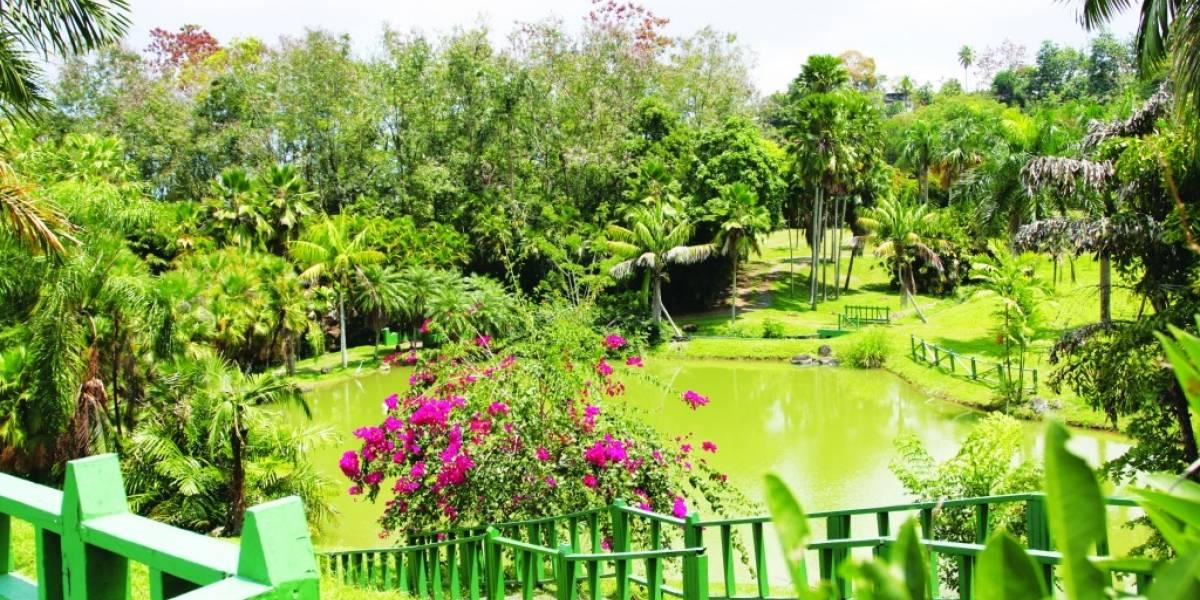 Reabren el Jardín Botánico de Río Piedras