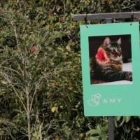 Una empresa colombiana convierte a las mascotas muertas en compostaje para crear nueva vida