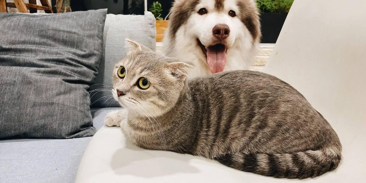 Cachorros e gatos podem pegar COVID-19?