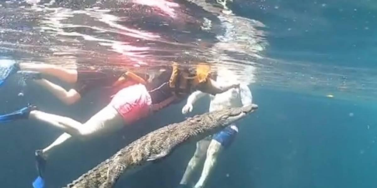 Coragem! Turistas registram mergulho 'tranquilo' com crocodilo no México; assista