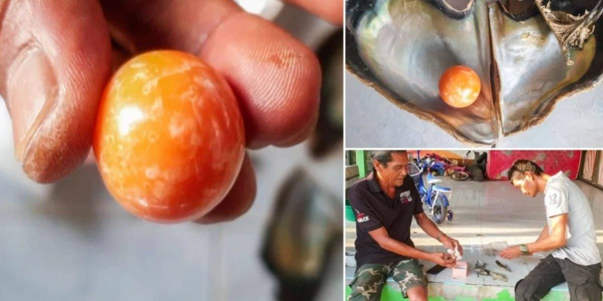Vídeo: pescador pobre encontra pérola rara avaliada em quase dois milhões de reais