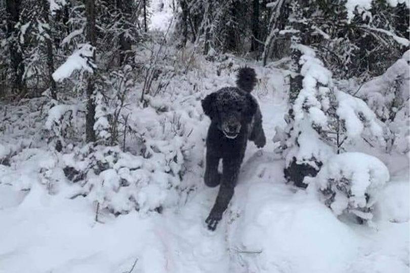 perrito nieve