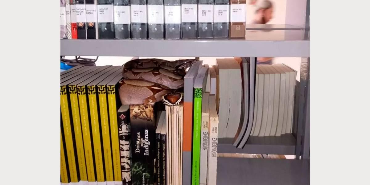 Jiboia de 1 metro é encontrada em biblioteca de Roraima