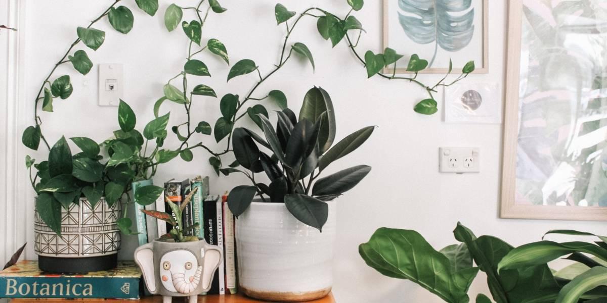 Cinco plantas que afastam as energias ruins da sua casa