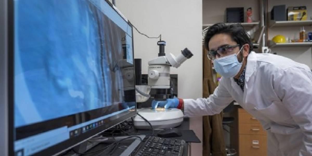 Científicos crean diminutos robots que emulan el comportamiento de agrupación de los Gusanos Negros de California