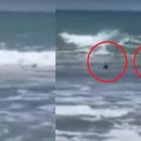Em meio a gritos de desespero, banhista escapa por pouco de ataque de dois tubarões; assista