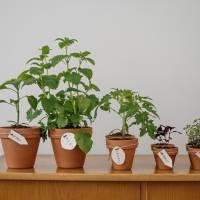 Fácil e prático! 5 plantinhas para ter uma horta de temperos no seu apartamento