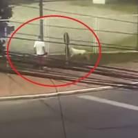 Câmera registra ataque violento de pitbull a homem com criança de 3 anos e Yorkshire