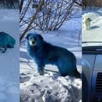 Cachorros azuis aparecem perto de fábrica abandonada na Rússia