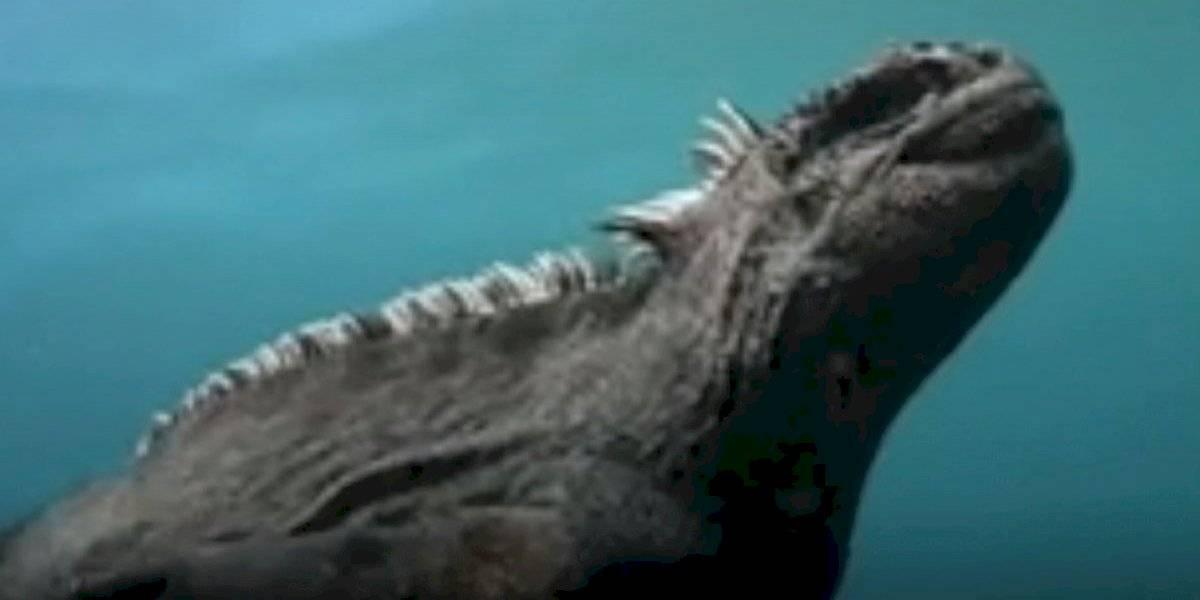 Encuentran una versión miniatura de Godzilla en Islas Galápagos