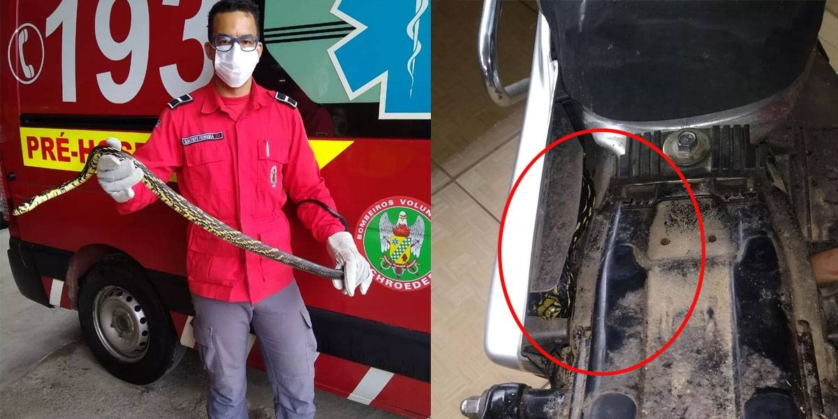 Homem encontra cobra Caninana debaixo do banco de sua moto