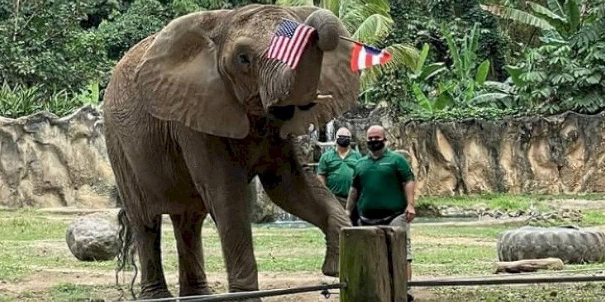 Elefanta Mundi cumple sus 39 años