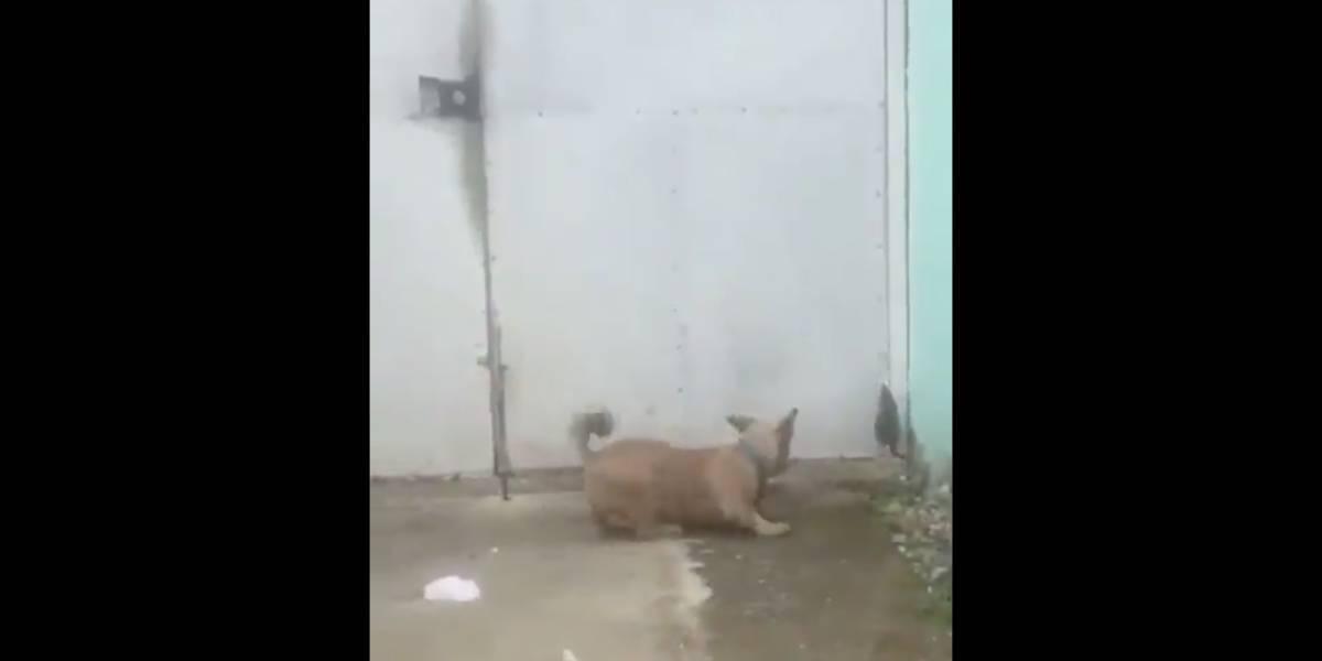 Pequena 'batalha' entre cachorro 'youtube' e rato quebra a internet; confira vídeo viral
