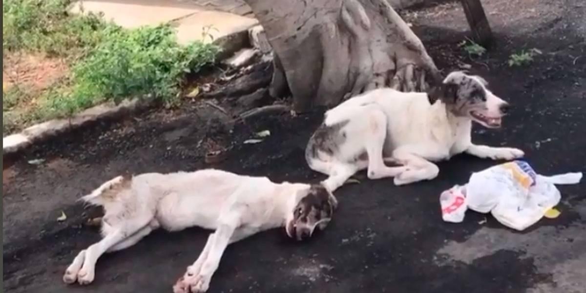 Cão passa a noite ao lado do amigo atropelado para protegê-lo