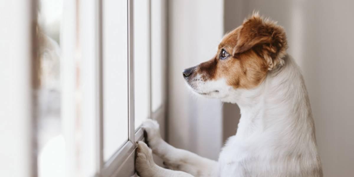 5 dicas de como acalmar o seu cachorro e mantê-lo tranquilo