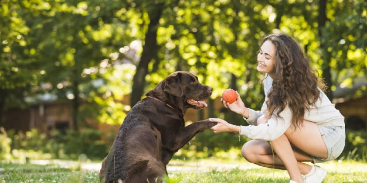 7 formas de 'dizer' eu te amo para o seu cachorro; atitudes simples