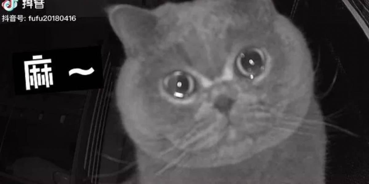 Sozinho, gato chora em frente a câmera de segurança; donos foram viajar durante feriado prolongado