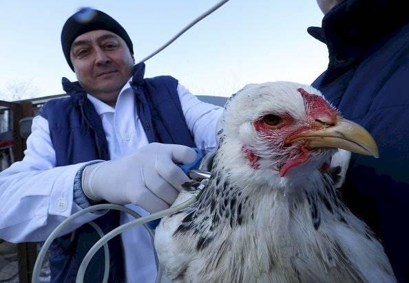 ! Rusia detecta primer caso de gripe aviar H5N8