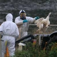 Rusia identifica el primer caso de gripe aviar H5N8 en un ser humano