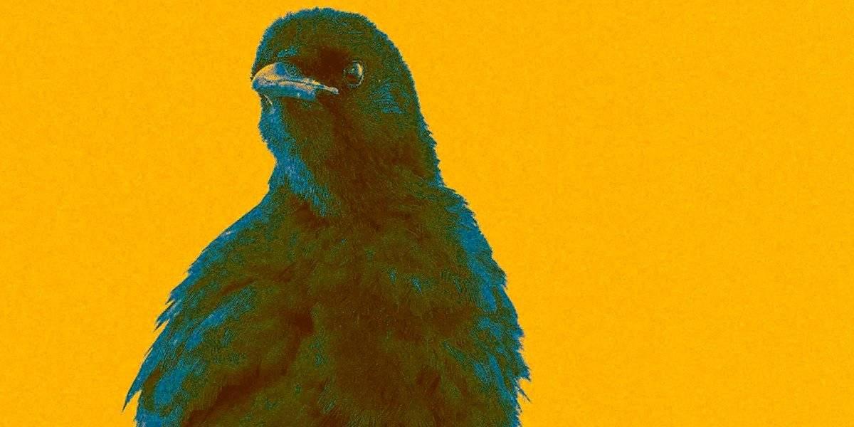 Gripe aviar H5N8: Rusia detecta primer caso en humanos y la OMS está preocupada