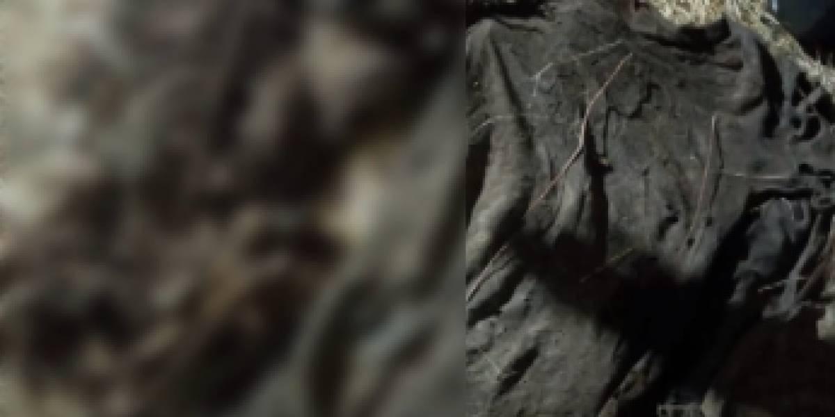 Siguen localizando fosas clandestinas en Celaya, han recuperado 11 cuerpos