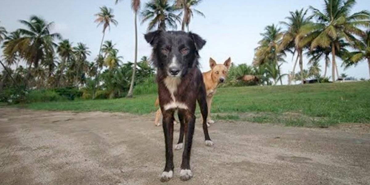 The Humane Society de Puerto Rico y el Municipio de Loíza se juntan para esterilizar mascotas